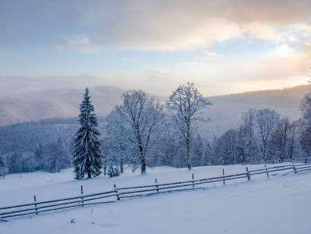Glade on the mountain slope with fence covered with snow on foreground, single spruce and several deciduous trees on a background of mountain ranges in Carpathian Mountains at sunset  Stock Photo