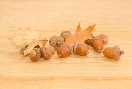 Pile of ripe acorns, some of which in their cuplike cupules and two autumn oak leaves on a surface of oak planks closeup Stock Photo