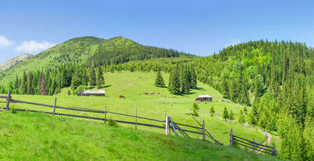 Panorama of the mountain pasture with rural outbuildings, grazing horses and sheep against a background of forest, mountain peaks and sky in the Carpathian Mountains in summer day  Stock Photo