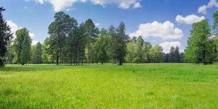 Large glade covered with grass and flowers on backgtound of the conifers and deciduous trees and sky in the park in summer day