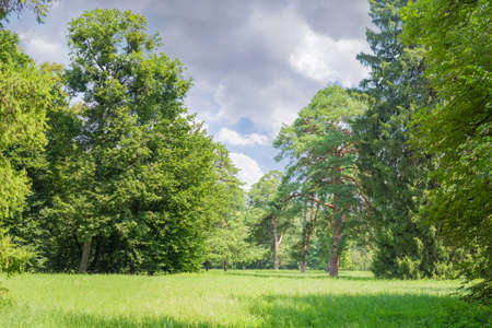 Glade covered with grass among of the conifers and deciduous trees in the park against of the sky in summer day
