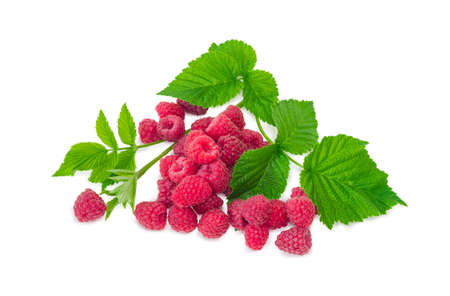 Small pile of fresh cultivated red raspberries with raspberry twig with leaves on a white background