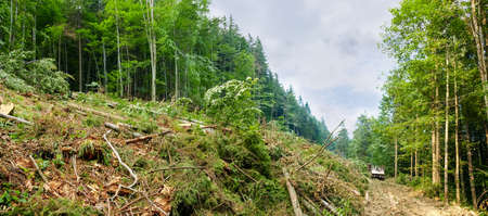 Fresh logging site on a mountain slope during trees cut down in the Carpathian Mountains