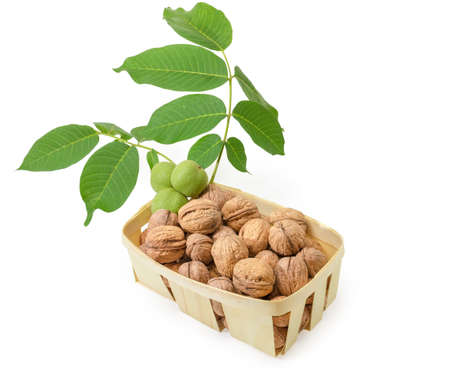 Ripe whole not husked walnuts in the small wooden basket with walnut branch with unripe fruits on a white background 写真素材