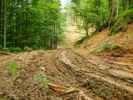 Dirt road to the logging site for removal of wood in the Carpathian Mountains Фото со стока - 105440194