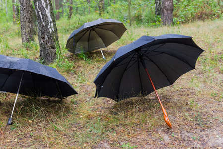 Three different black opened umbrellas lying in rainy forest at selective focus