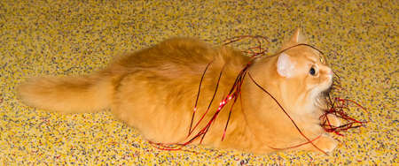 Ginger cat playing with red Christmas lametta on a speckled carpeting Stockfoto - 111891631