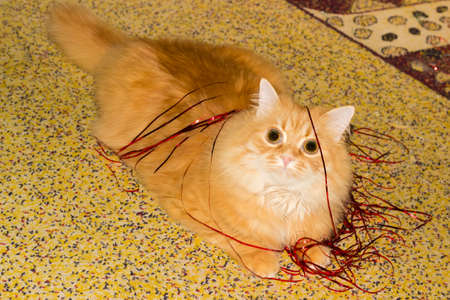 Ginger cat playing with red Christmas lametta on a speckled carpeting