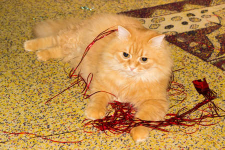 Ginger cat lying among of the red Christmas lametta on a speckled carpeting