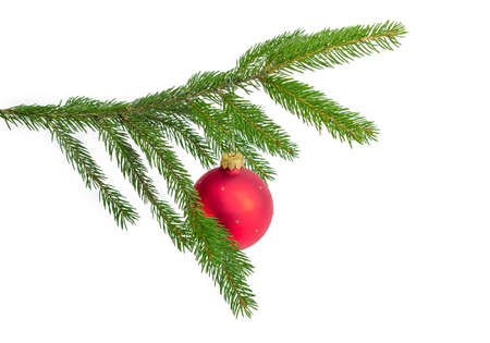 Green living branch of spruce with hanging red Christmas ball on a white background