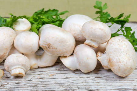 Cultivated raw white button mushrooms on background of parsley on an old cracked wooden surface at selective focus