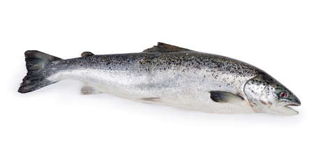 Whole uncooked fresh salmon on a white background