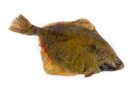 La plie crue également connue sous le nom de poisson plat sur fond blanc