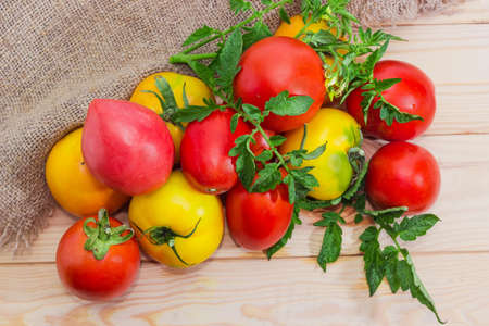 Small pile of the fresh red, yellow and pink tomatoes and twigs of tomato plant with leaves and flowers on the rustic table with burlap, top view Stock Photo