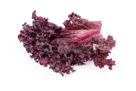 Single leaf of red lettuce variety Lollo Rosso on a white background