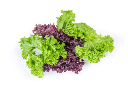 Lettuce leaves two varieties - red Lollo Rosso and pale green Lollo Bionda on a white background Imagens