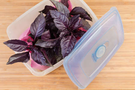 Twigs of the fresh purple basil in plastic container with open blue lid on the wooden surface, top view close-up Imagens