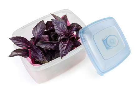 Twigs of the fresh purple basil in plastic container with open blue lid on a white background