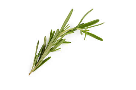 Single stem of fresh rosemary, also known as anthos on a white background Stock Photo
