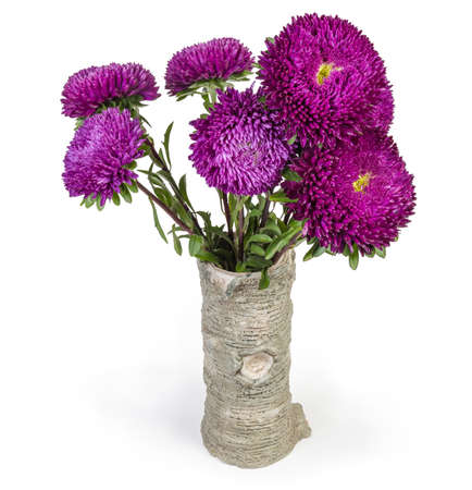 Bouquet of purple asters in the ceramic flower vase, stylized under old tree trunk on a white background