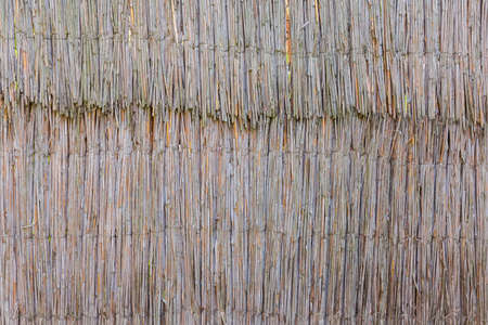 Background of fragment of the old fence made of dried reed stems