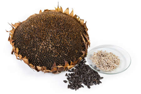 Pile of whole sunflower seeds, peeled seeds on the glass soucer and dry head of ripe sunflower on a white background