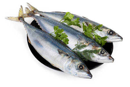 Three unfrozen uncooked carcasses of chub mackerel with parsley and dill twigs on the black plate on a white background