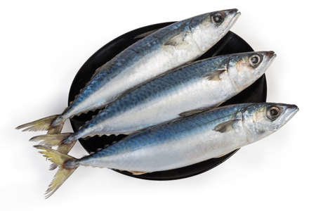 Three unfrozen uncooked carcasses of chub mackerel on a white background, top view