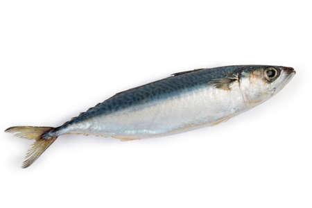 Unfrozen uncooked carcass of chub mackerel on a white background  스톡 콘텐츠