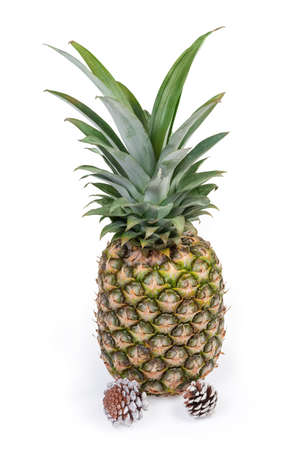 Large whole fresh ripe pineapple with tuft of stiff leaves, pine cones on a white background