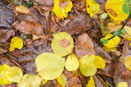 Fragment of land surface covered with wet fallen yellow and brown leaves in autumn cloudy day, top view, background