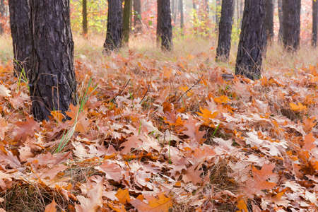 Ground in the autumn forest covered with fallen leaves and withered grass, fragment close-up in selective focus