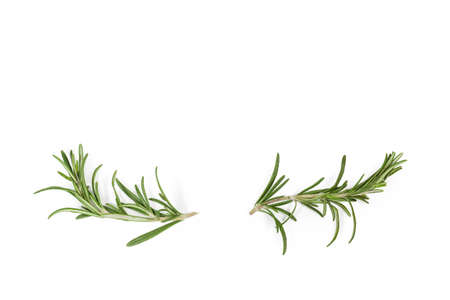 Two small stems of fresh rosemary with leaves located at the bottom on a white background