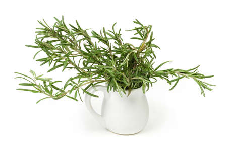 Twigs of fresh rosemary with leaves in small white ceramic jug on a white background