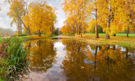 Scenic long narrow lake with different old trees on the both shores in autumn park