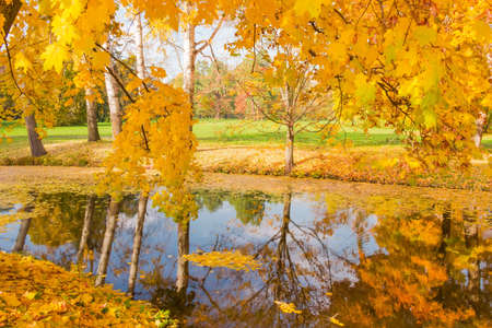 Different trees on the both shores of small lake and  maple branches hanging over the water in autumn park  Stock fotó