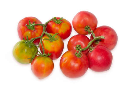 Freshly picked varicolored tomatoes on two twigs on a white background