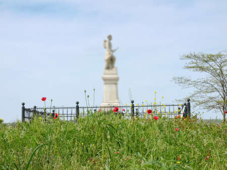Flowering wild growing field poppies on a blurred background of monument to fallen soldiers
