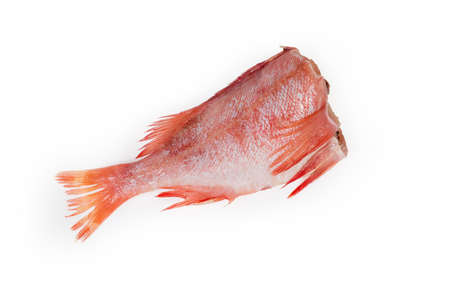 Raw headless gutted carcass of redfish also known as ocean perch or Norway haddock on a white background Banco de Imagens