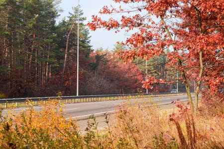 Straight section of the motorway with traffic barriers, lampposts and forest on both sides at autumn, view from forest beside Standard-Bild