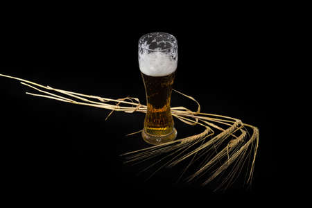 Partly filled beer glass of lager beer and several ripe barley stems with ears on a black background Reklamní fotografie