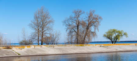Pairs of different old trees growing on headland of reservoir with concrete breakwater on a foreground against a clear sky in early spring, panoramic view