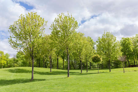 Deciduous trees rarely growing among the big hilly glade in spring park against the other trees and cloudy sky on a background