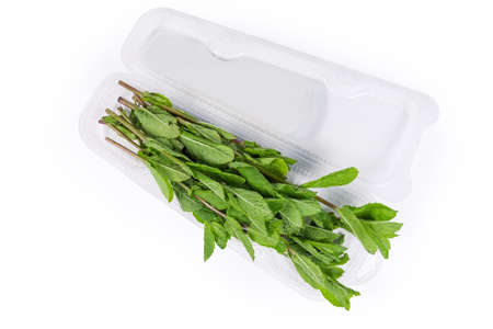 Fresh spearmint stems in an open transparent plastic container on a white background, top view Reklamní fotografie