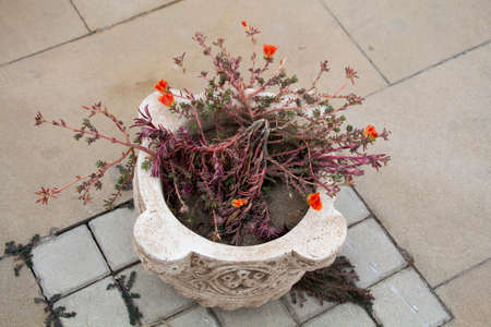 antique vase: Gypsum vase in the old antique style on the street with the red flowers
