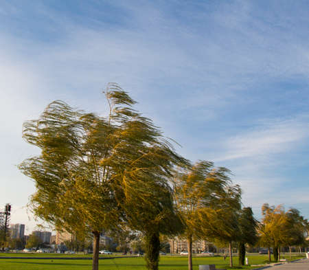 Several trees in the park on autumn windy day. City background Stock Photo