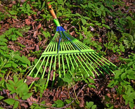 Garden rakes lie on  ground with not yet cleaned dry last year's leaves and new young grass in spring