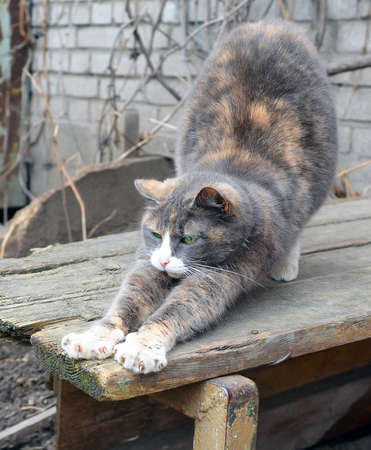 the cat sleeping on a wooden bench in a garden, woke up and stretches 스톡 콘텐츠