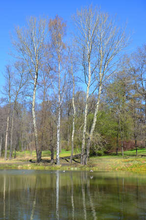 Landscape. Lake coast in the spring. fresh green grass. Trees and bushes partially became covered by leaves. Migratory birds returned from the South.