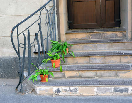 fragment of an old stone ladder before a door with a handrail of the irregular shape and plants in pots on steps